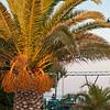 Palme bei der Taverne am Steinstrand