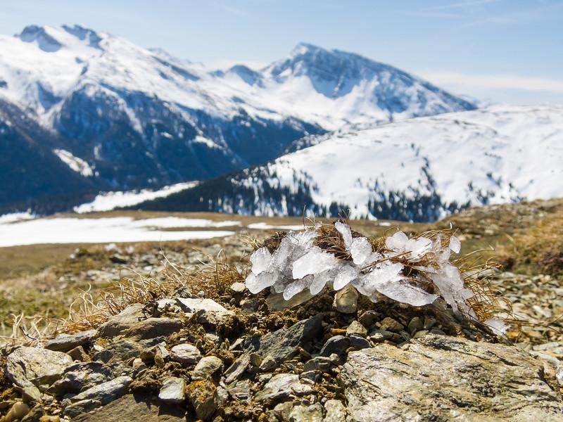 Raureif auf einem Grasbüschel; im Hintergrund Südtirol