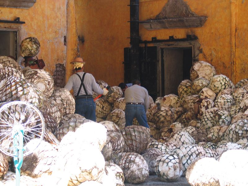 The workers split the pinaple if it is too big then load them into the ovens.