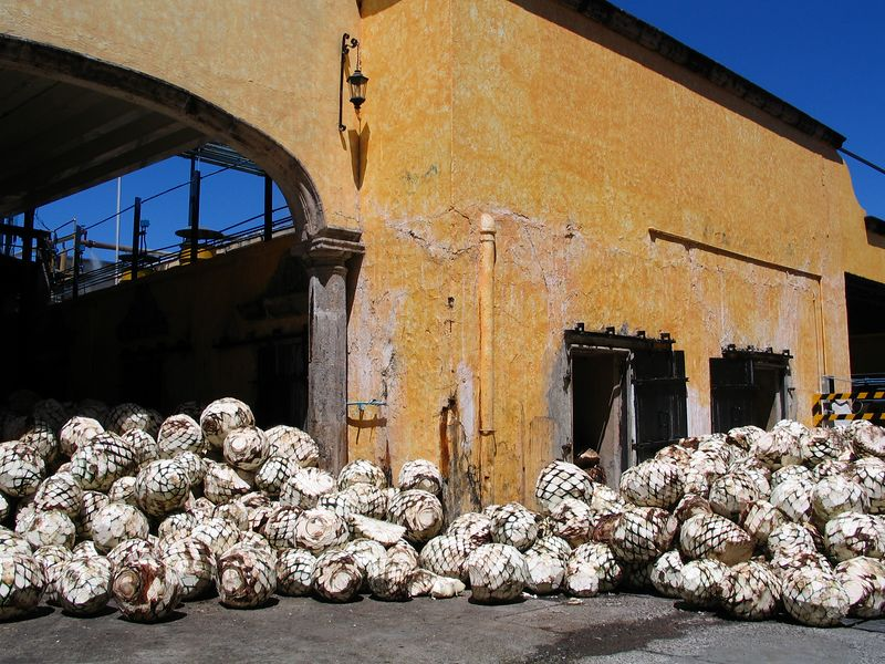 The oldest Tequila Factory, Jose Cuervo