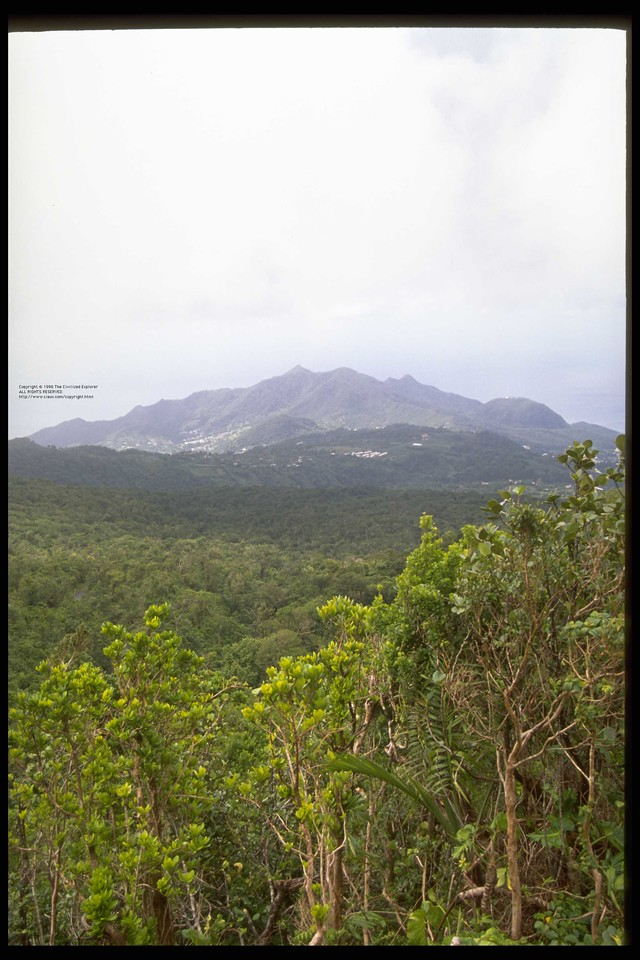 View of La Soufriere from within the rain forest included in the Parc National de la Guadeloupe.