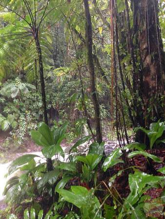 hike in tropical forest guadeloupe 4
