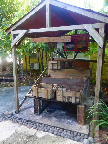 Maison du cacao garden tour Guadeloupe 2