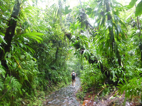 Walk to the Carbet falls Guadeloupe