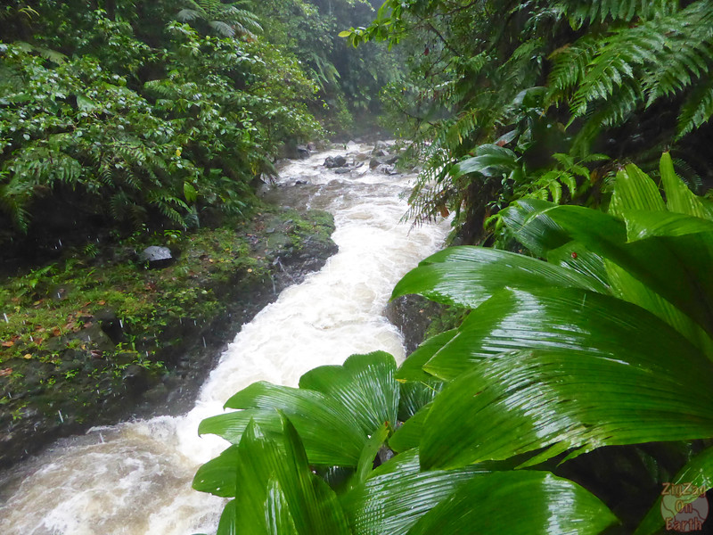 Best photo Guadeloupe: rainforest