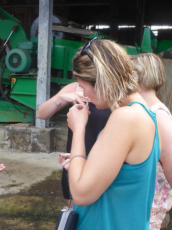 rum factory, Longueteau, Guadeloupe 3