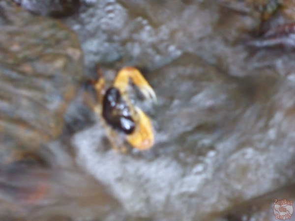 yellow river crab