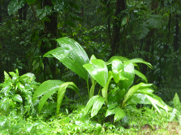 Leaves tropical forest guadeloupe island 1