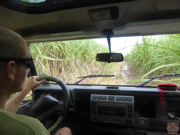 Longueteau rum plantation 1