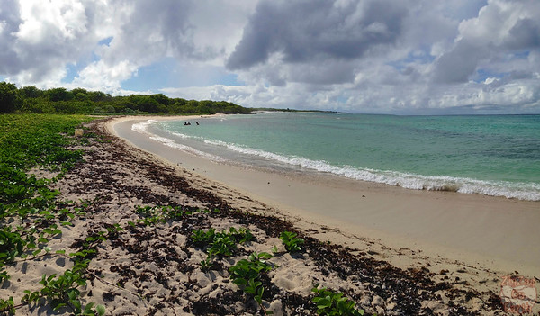 Turtle location Petite Terre, Guadeloupe photo 1