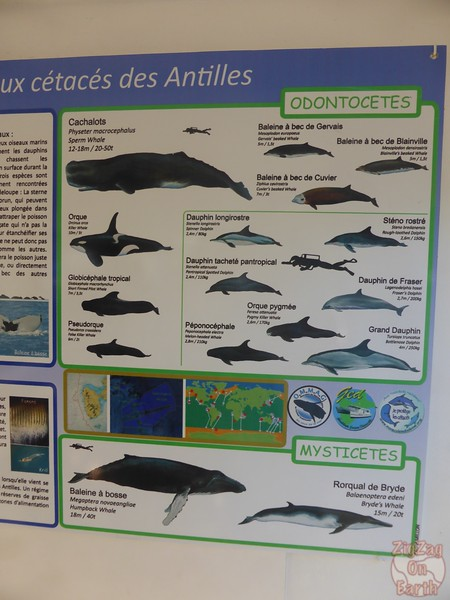 displays whales and dolphins