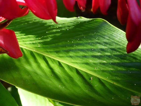 Guadeloupe plants 3