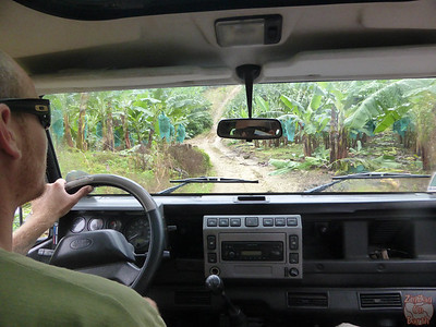 Driving in a banana plantation, organised tour, Guadeloupe