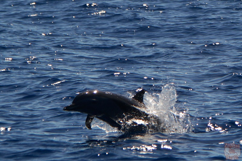 Best photo Guadeloupe: dolphin