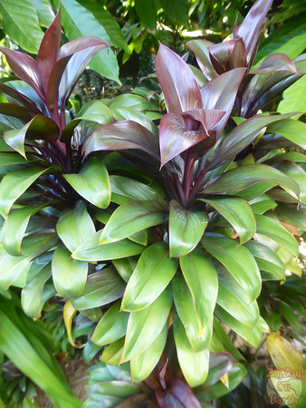 Guadeloupe plants 2