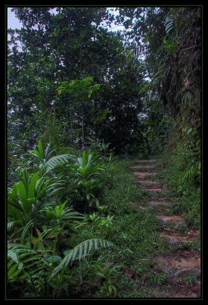 ...a hiking trail in Guadeloupe. It takes you about an hour to get to the summit but there is nothing to see up there because the thick forest.