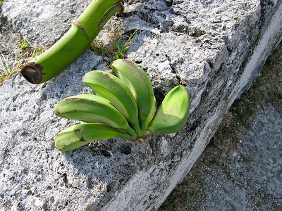 Mini-bananas