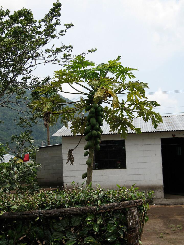 2008 Guatemala-2131