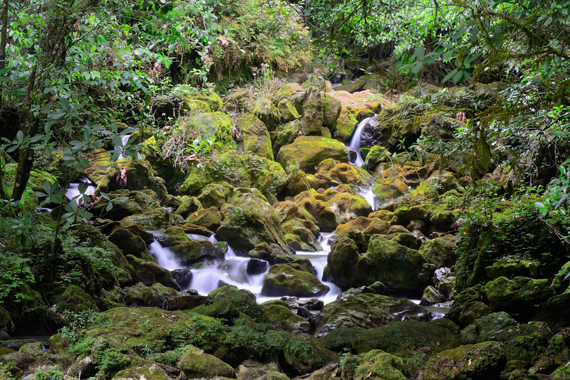 Cloud Forest River