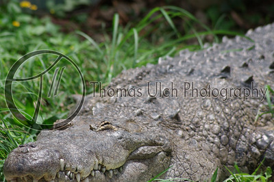As soon as my shutter clicked, he was instantly alert! Lake Peten Itza, Guatemala.