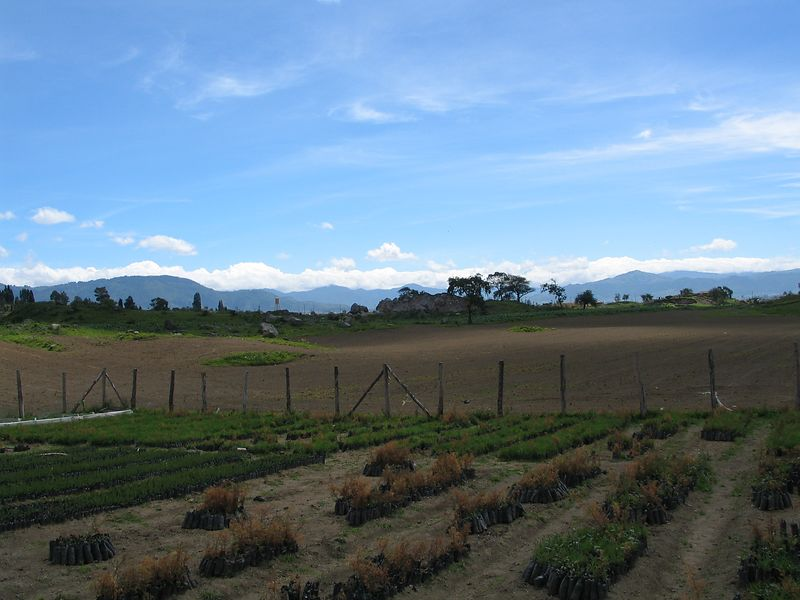 The next few photos are of the reforestation project that ICA runs.  20% of our tuition funds this and other projects in Guatemala.
