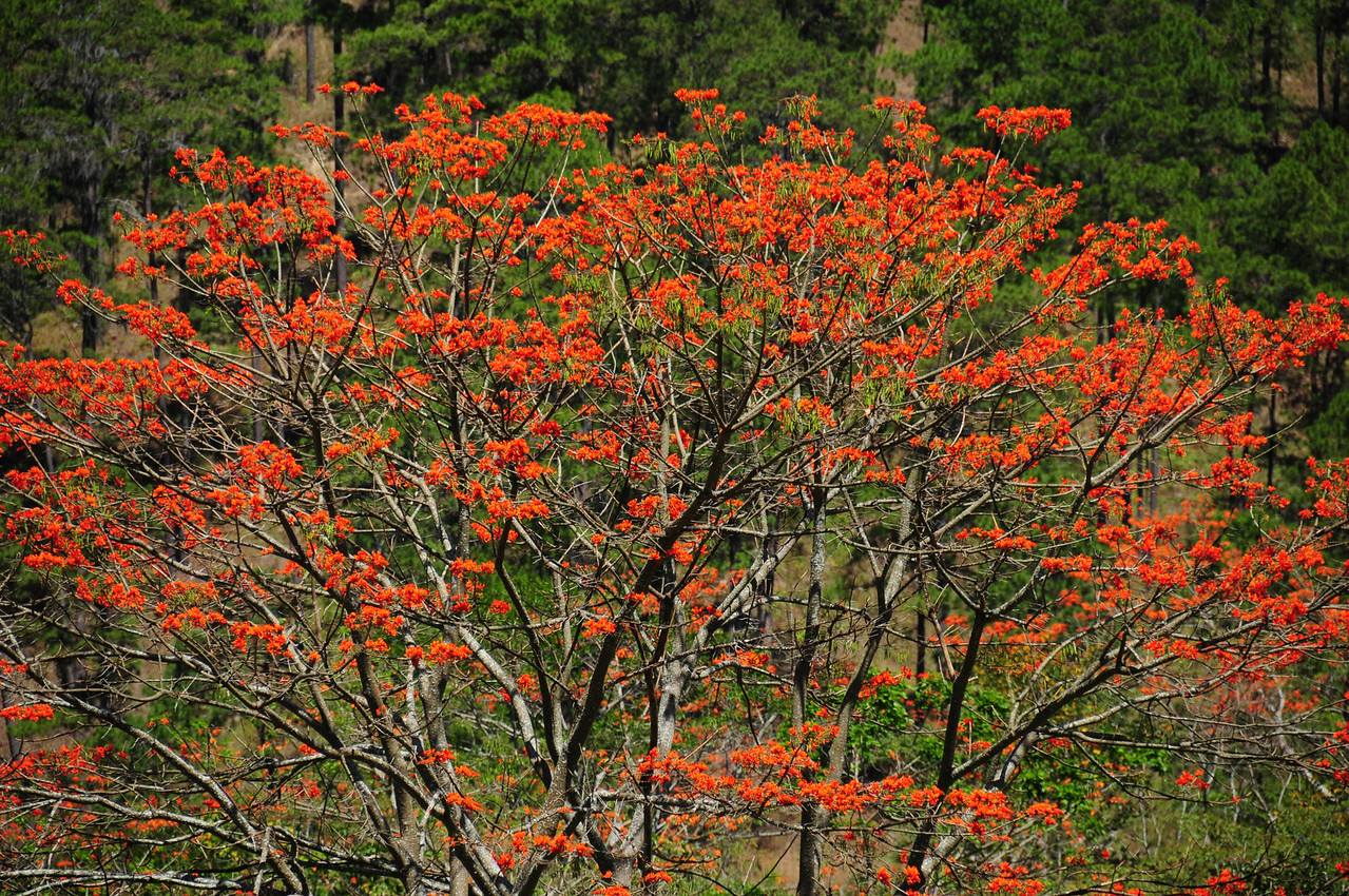 Roadside colour. El Salvador