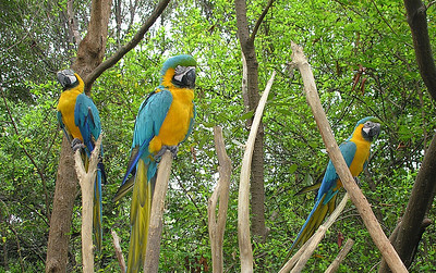 "The ""Historical Park"" has a bird walk (some birds are free-flying) and old restored hacienda houses. Blue-and-yellow Macaws."