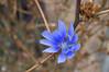 Wildflower in Guerneville