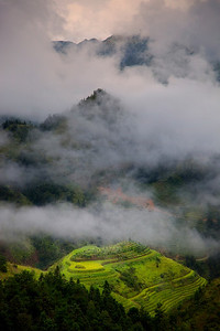 Rice fields and fog near Dazhai village