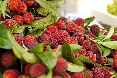 Bayberries were in season, sharp and sweet
