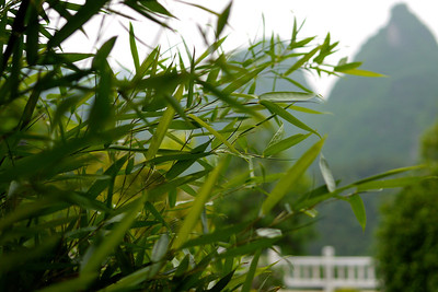 Bamboo and mountains.
