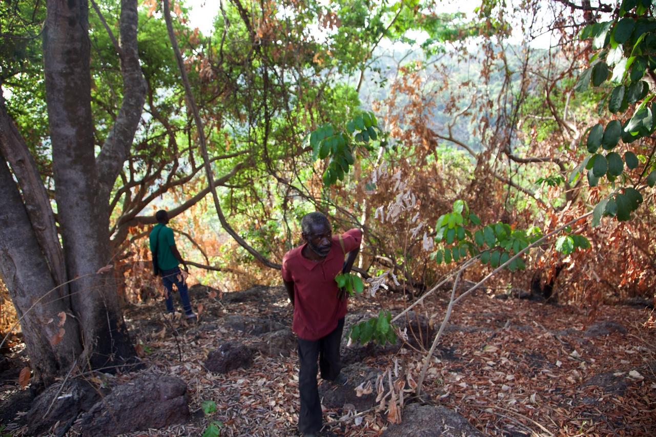 Tracking chimpanzees near Boe National Park