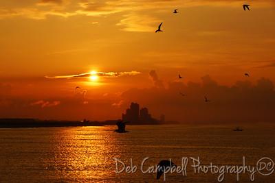 Birds flying around at Sunrise Gulf Shores, Alabama