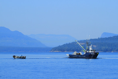 "The purse seiner ""Salish Sea""and dinghy set the net as they fish for salmon in the waters of Haro Strait, Canada."