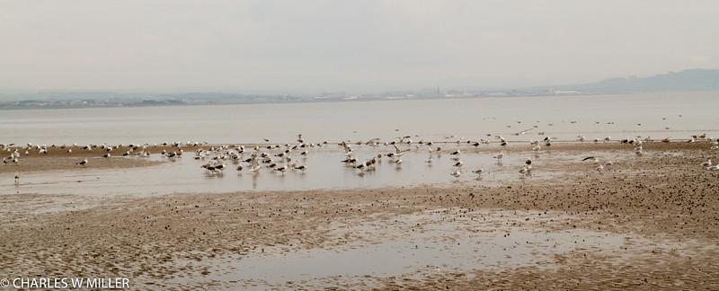 Flock on the beach