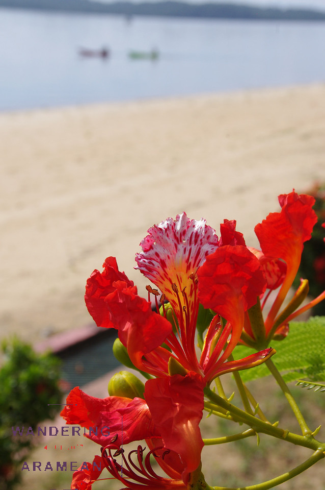 Pretty flower on the beach at the resort