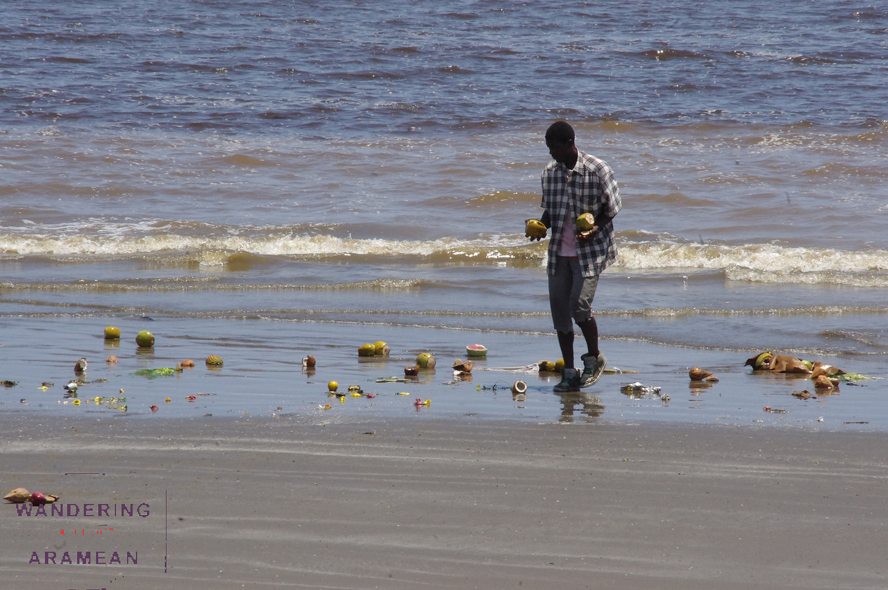 Colecting coconuts on the beach in Georgetown, Guyana