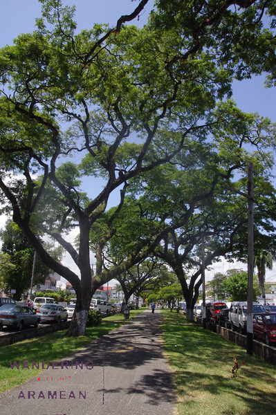 One of the shaded paths in Georgetown, Guyana