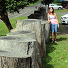large tree trunks make a rather solid wall