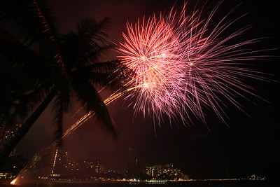 Firework Palm Trees