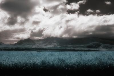 Dole Plantation  infrared photography