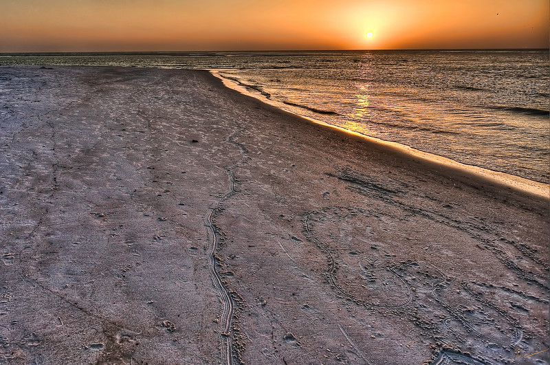 ~Golden Moment~<br /> Tracks in the Sand......