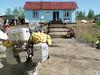 DSC03095Siberian cafe