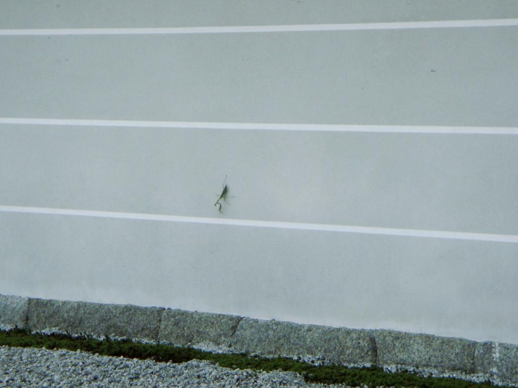 Praying mantis at Nanzenji