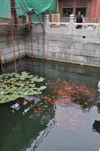 水池,故宮,北京