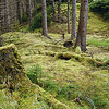Green undergrowth in an old growth rainforest - moss and ferns - Stock Image by Professional Nature Photographer Christina Craft