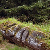 Haida Gwaii - Queen Charlotte Islands - ancient haida village<br /> <br /> <br /> <br /> Travel Stock Photography for the Nature Stock Photography Library by Professional Photographer Christina Craft