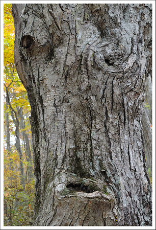 I loved this old man in the tree.