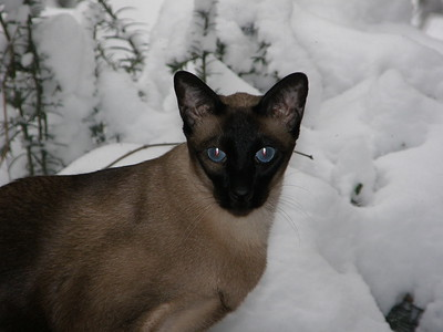 Skeeter in Winter