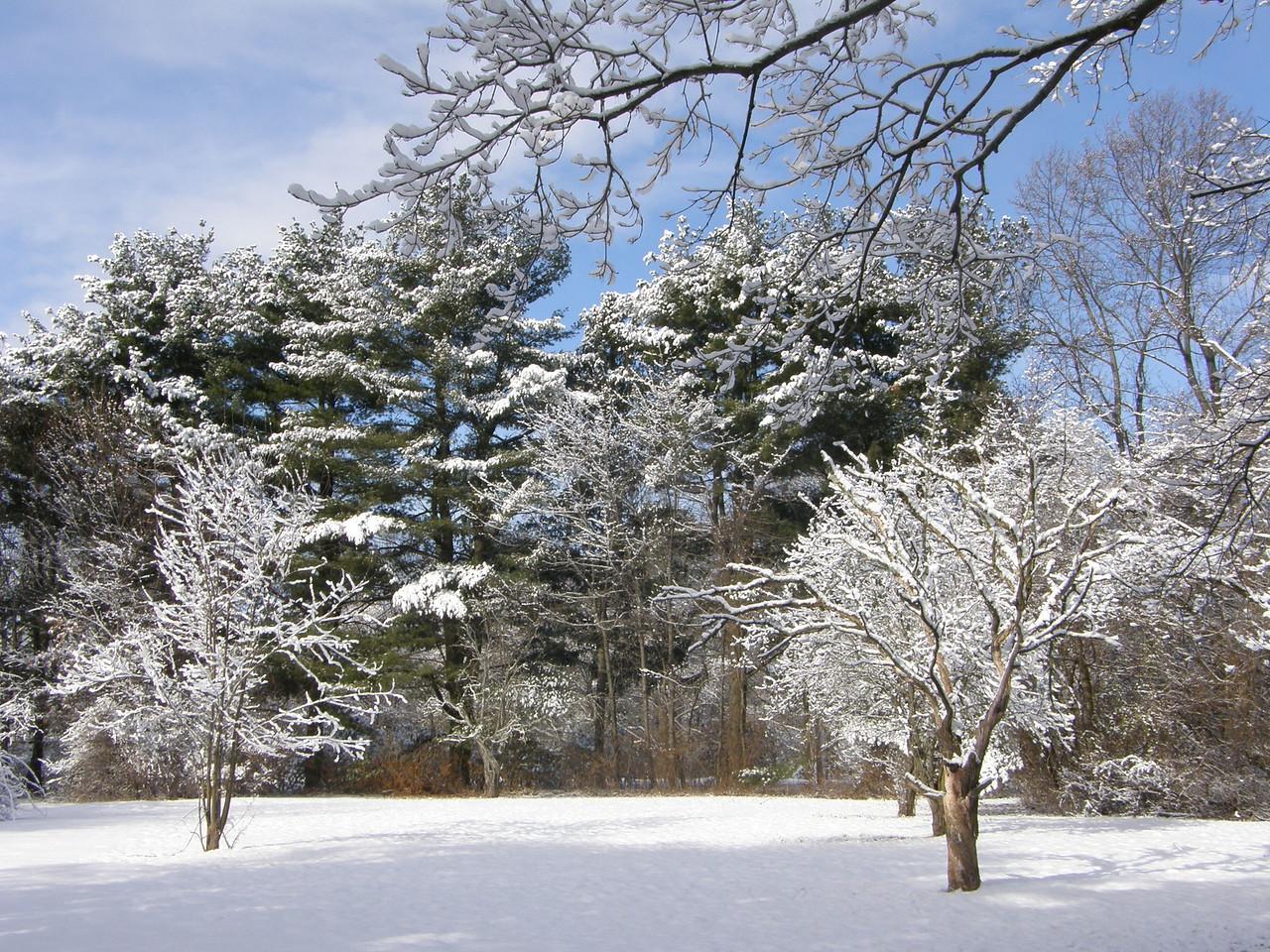 Winter at Ridgeside 1